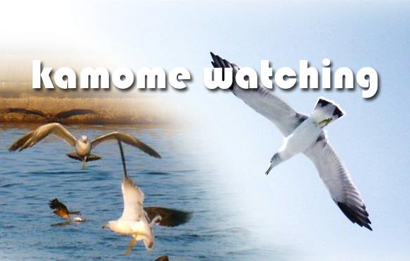 鴎 カモメ ウォッチング Gull kamome watching 牛深海中公園 グラスボート