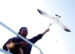 カモメウォッチング 牛深海域公園 グラスボート